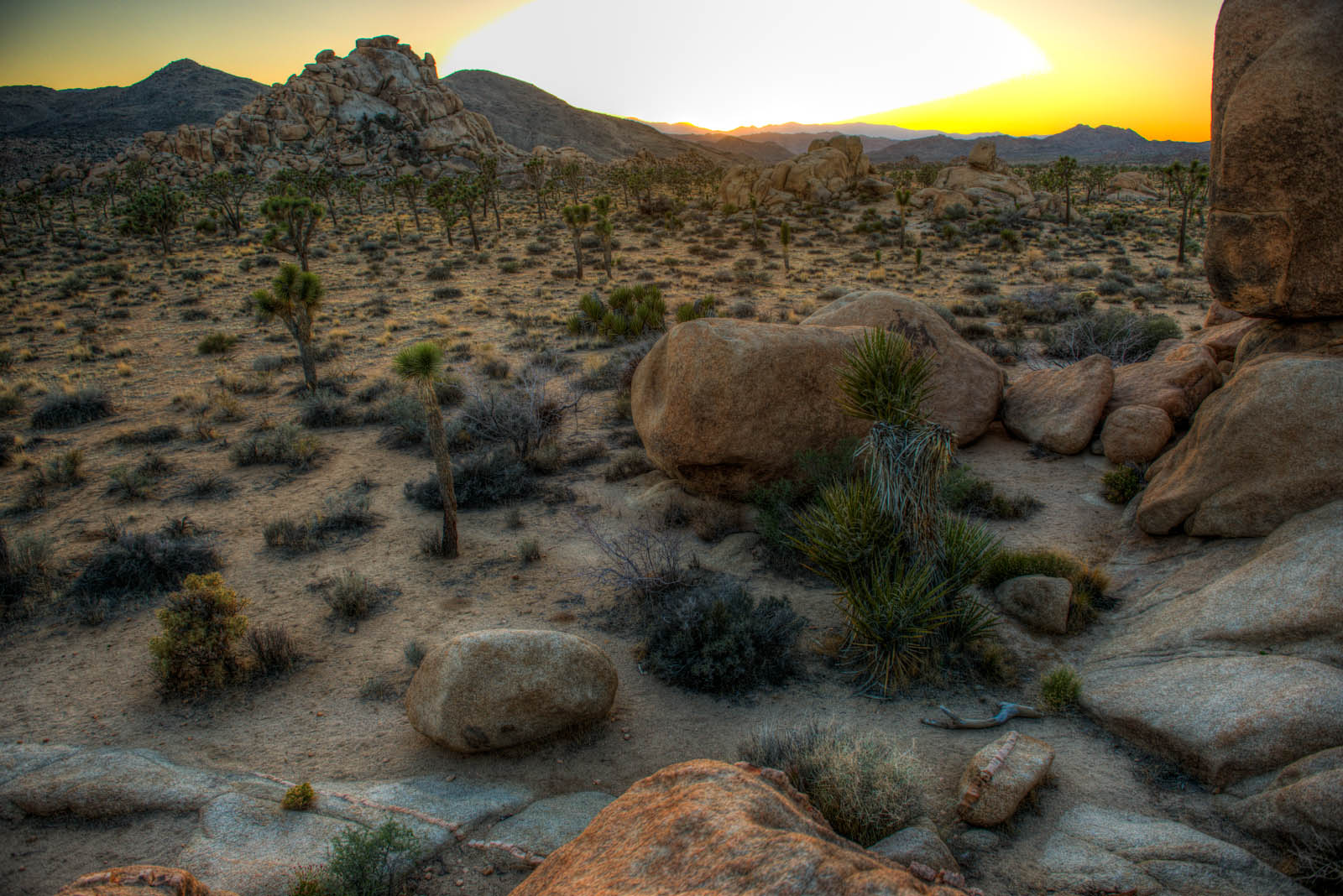 JoshuaTree_HDR_DSC_6190_1_2_3_4_tonemapped